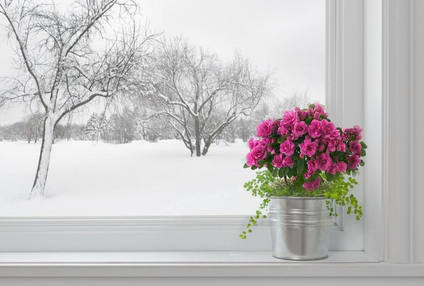 растение на подоконнике зимой