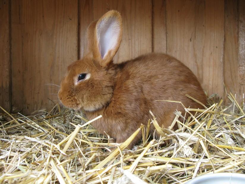 Кролиководство3