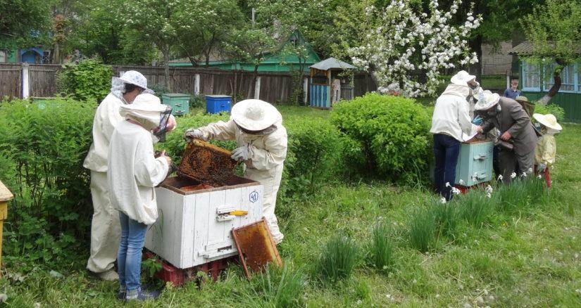 республиканский конкурс юных пчеловодов