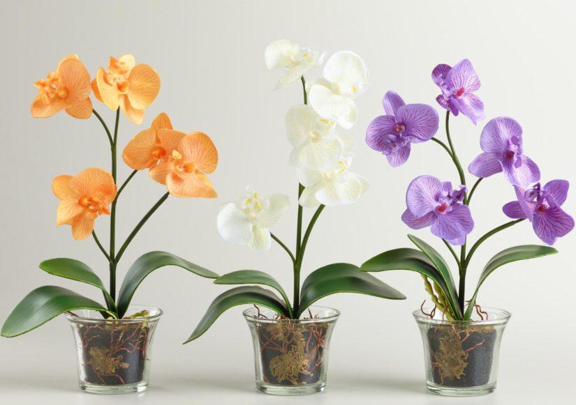 горшок с орхидеями