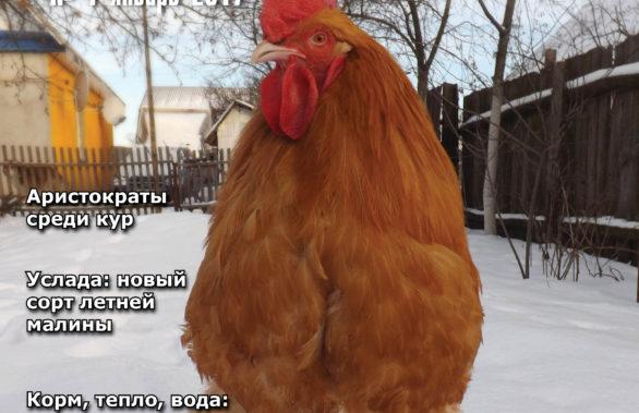 Календарь культура россия культура 2016