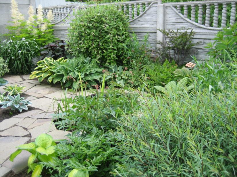 теневые растения