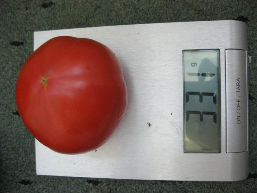 томат супернова