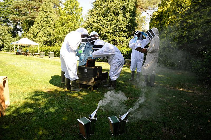 пчеловодство Беларуси