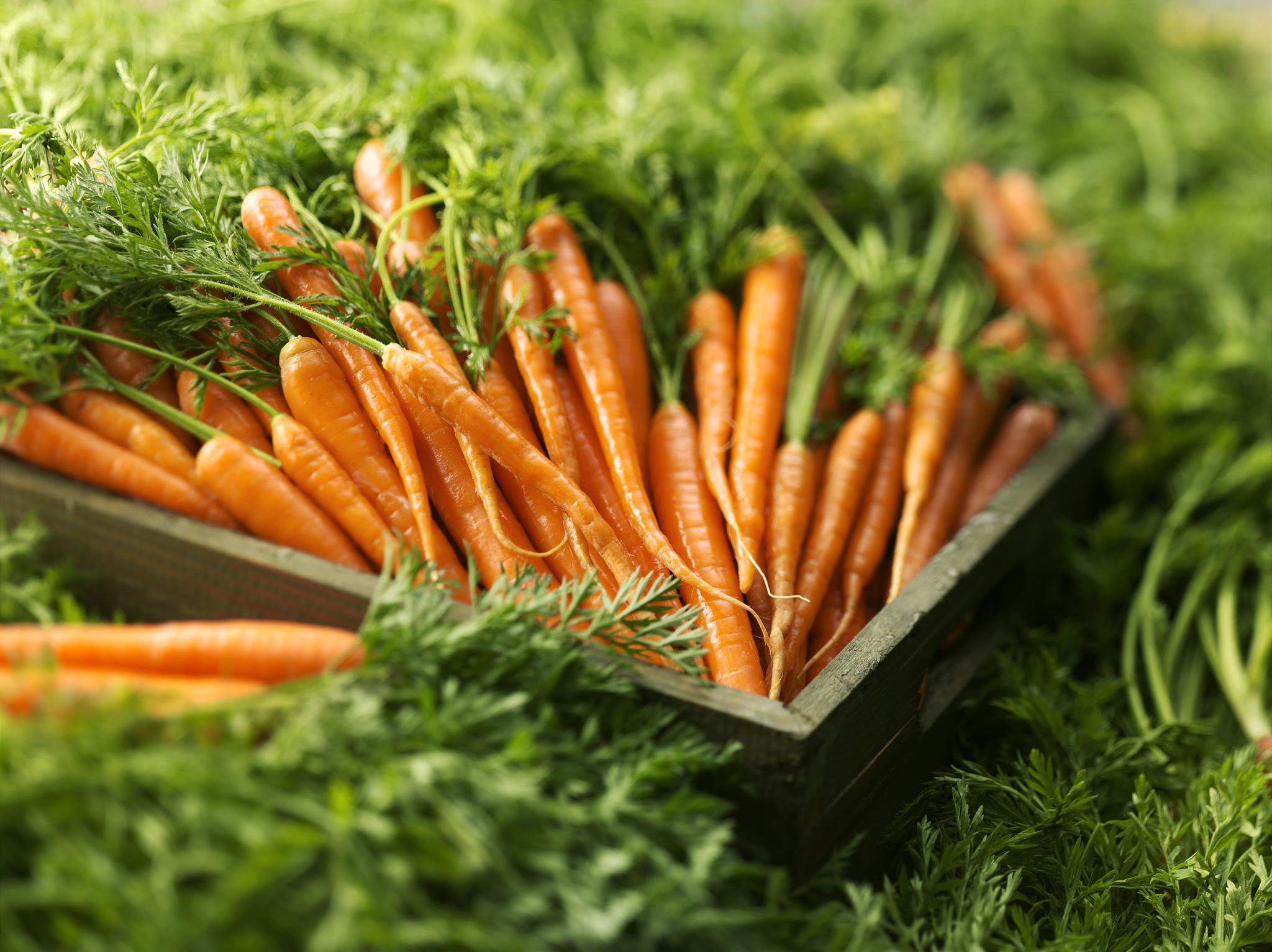 морковь фото в хорошем качестве крупным планом больше будете